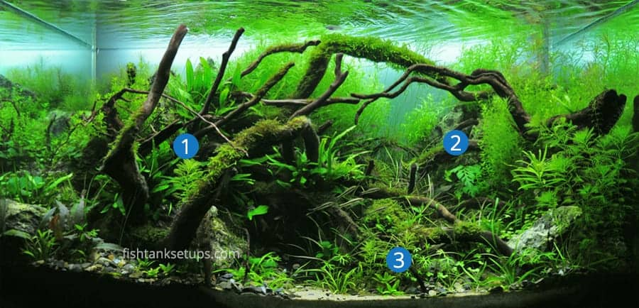 aquascaping-focal-points
