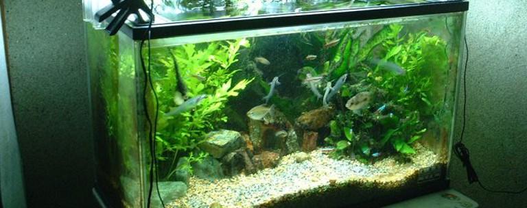 freshwater-aquarium-setup