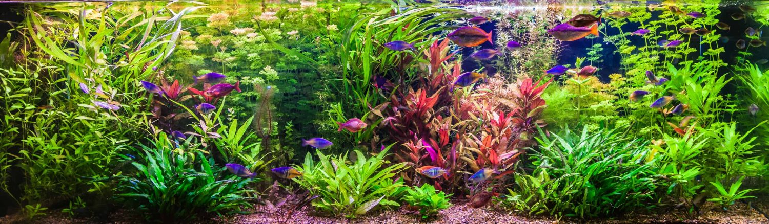 how to start an aquarium