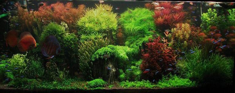 planted-aquarium-setup-by-shay-fertig