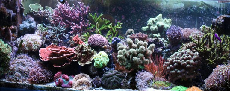 saltwater-reef-aquarium-setup
