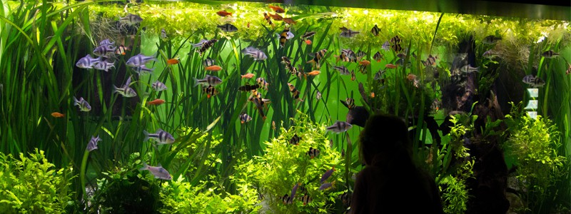 best-aquarium-filter-for-large-aquariums