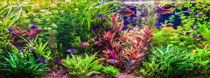 aquarium-led-lighting-for-planted-tank