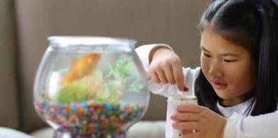 fish-tanks-for-kids