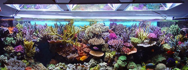 led-aquarium-lighting-for-reef-tank