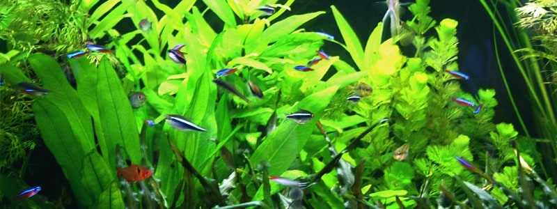planted-fish-tank-lighting