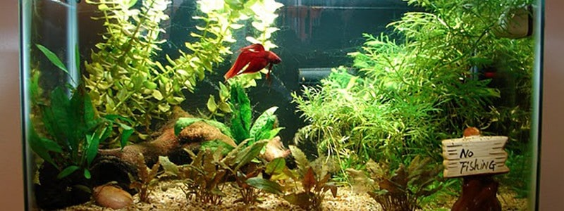 5 Of The Best Small Aquarium Filters Reviews