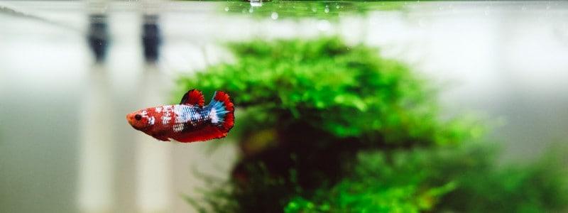 best-betta-fish-tank
