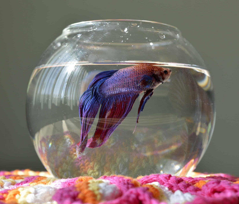 betta-fish-tank-size