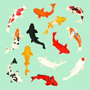 types-of-koi-fish