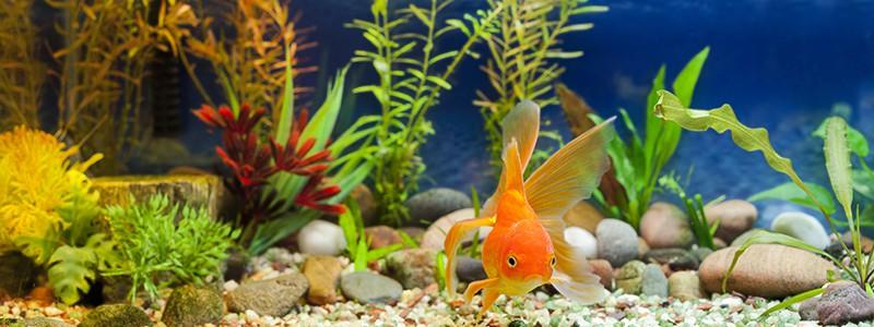 can-goldfish-eat-bread