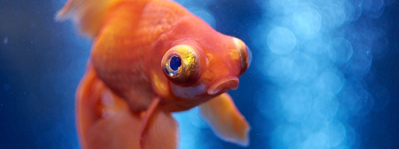 how-to-calm-down-stressed-fish