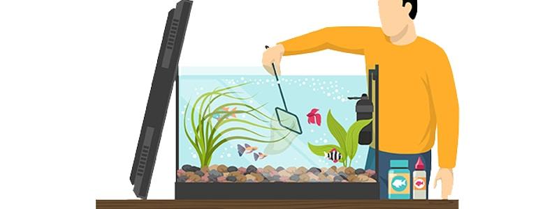 best-aquarium-kits