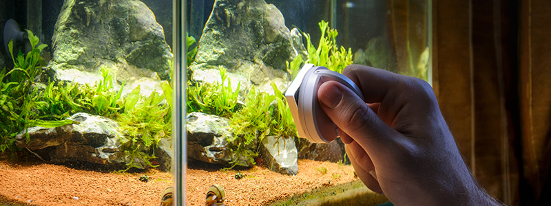 fish-tank-glass-cleaner