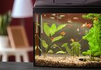 fish-tank-in-toddlers-room