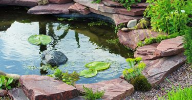 how-much-sunlight-does-a-fish-pond-need