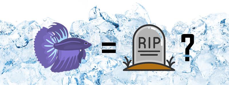 can-cold-water-kill-a-betta-fish-