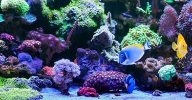 why-are-marine-fish-more-colorful-than-freshwater-fish