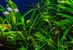 difference-between-emersed-and-submerged-aquarium-plants
