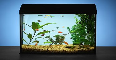 best-fish-for-5-gallon-aquarium