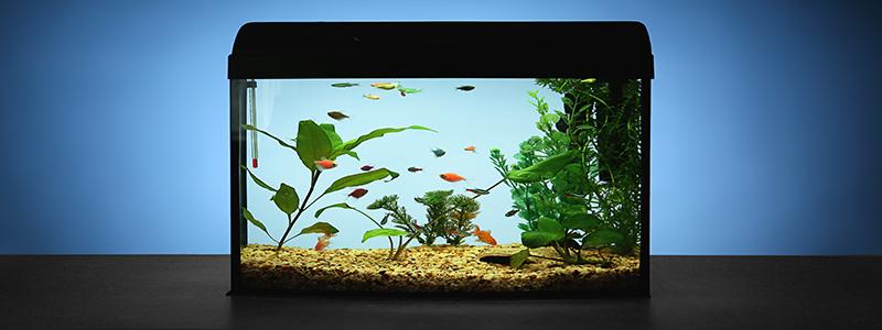 best-fish-for-5-gallon-aquarium