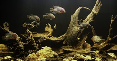 why-is-aquarium-driftwood-expensive